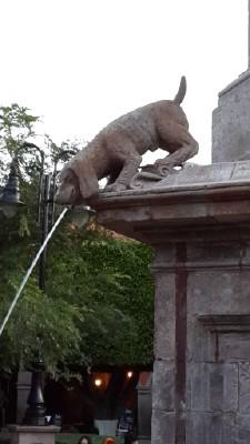 Queretaro Dog Park
